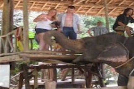 Tours con elefanti - escursioni phuket elefanti